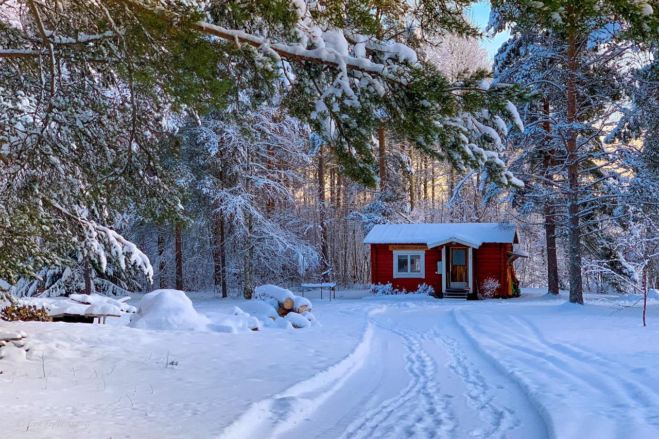 Jul i Umeå