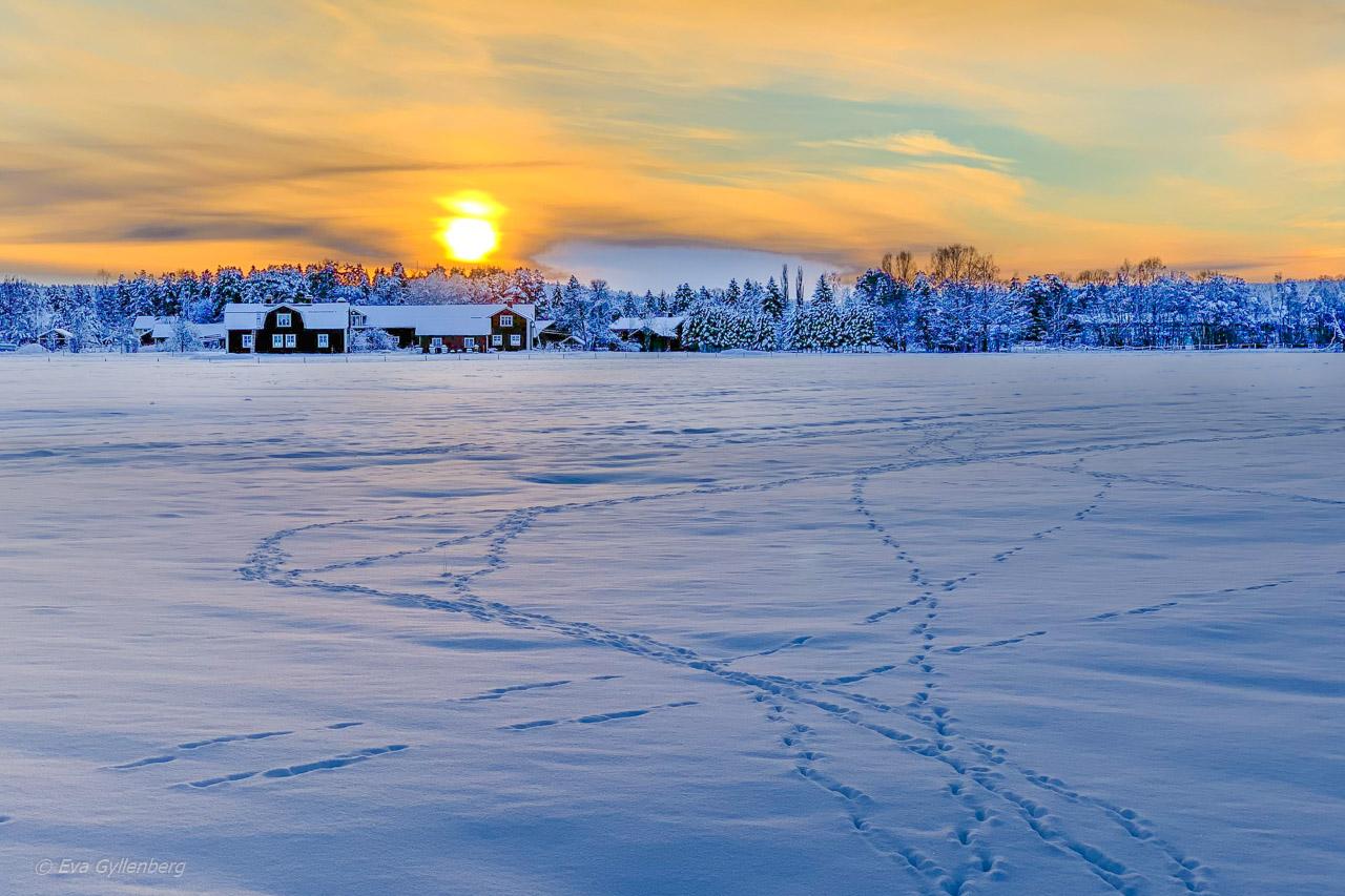Umeå jul