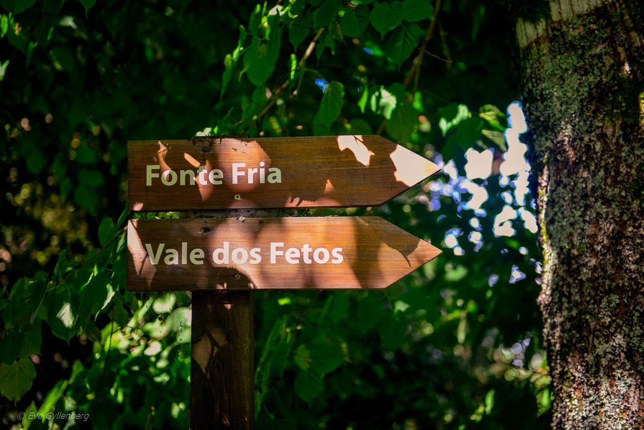 Mata Nacional do Bucaco - Portugal