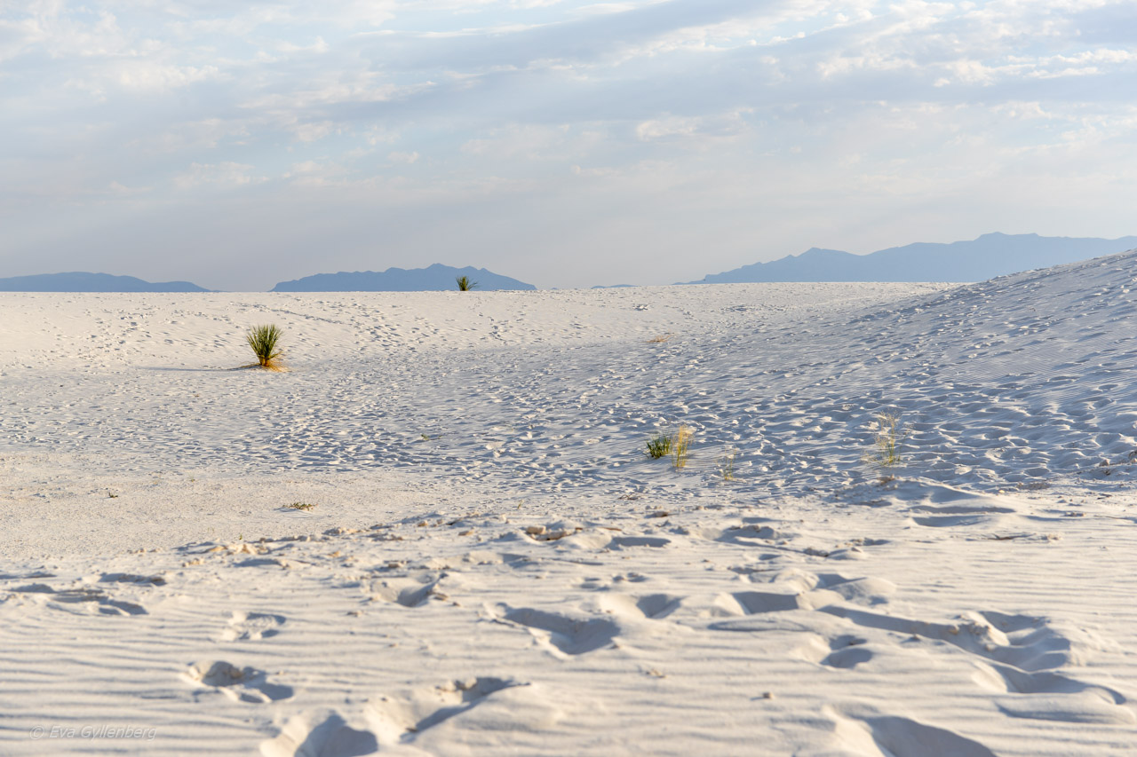 Vita drömlandskap i White Sands | New Mexico 14