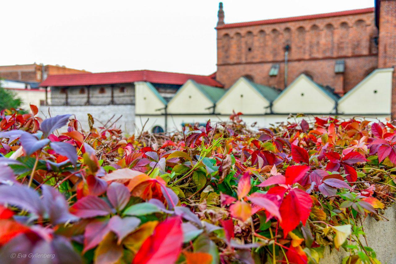 Krakow - Gamla synagogan