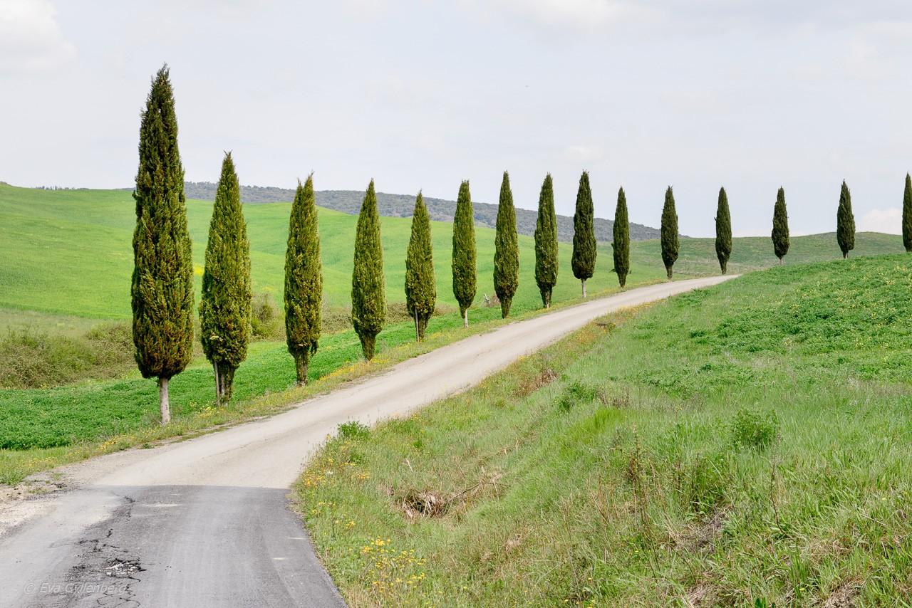 Köra bil i Italien – hur gör man?