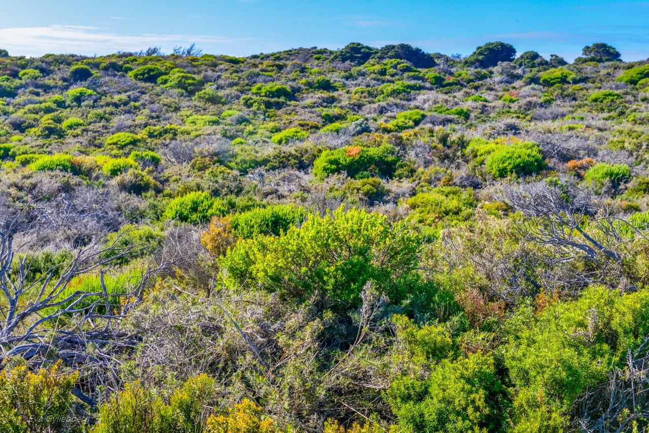 Rottnest Island - Australien - Hed
