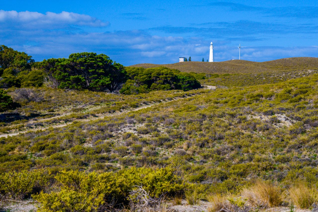 Rottnest Island - Australien - Fyr