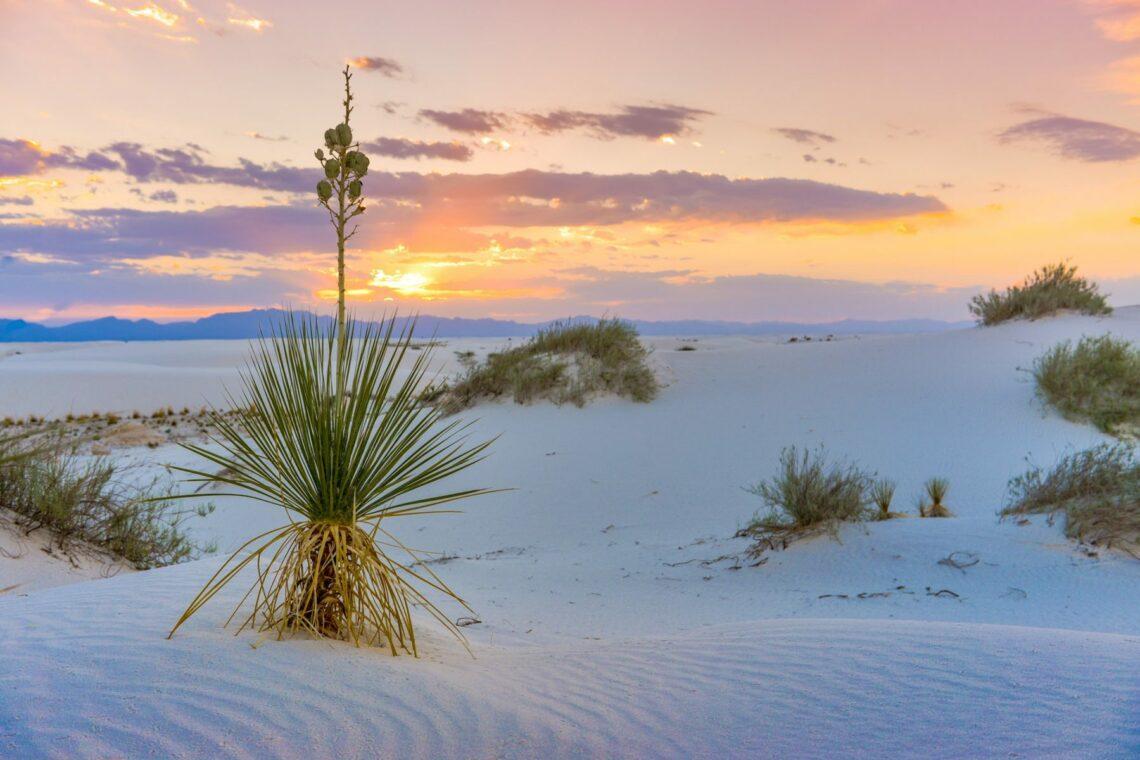 Vita drömlandskap i White Sands | New Mexico 1