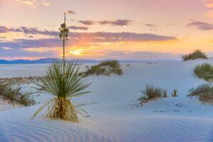 Vita drömlandskap i White Sands | New Mexico 17