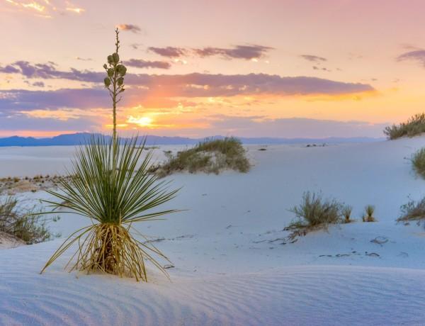 Vita drömlandskap i White Sands | New Mexico 2