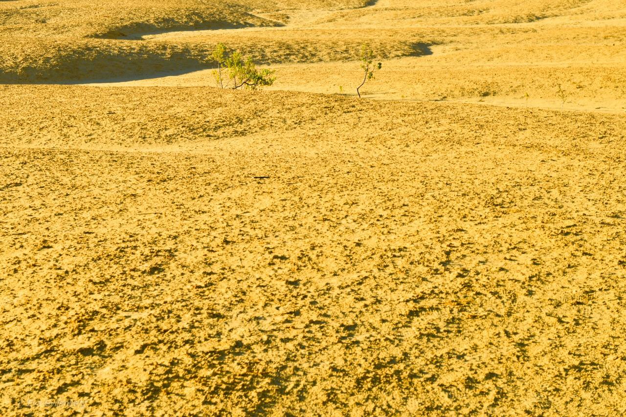 Pinnacles desert Australien 20