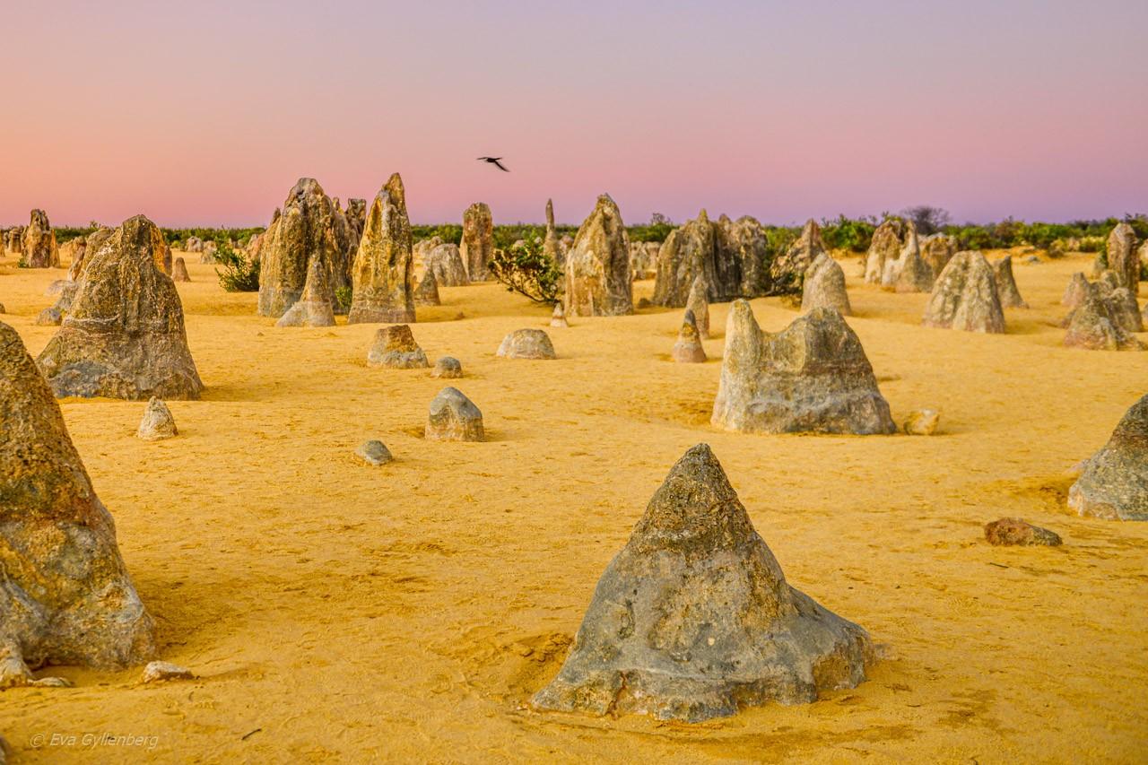Pinnacles desert Australien 30