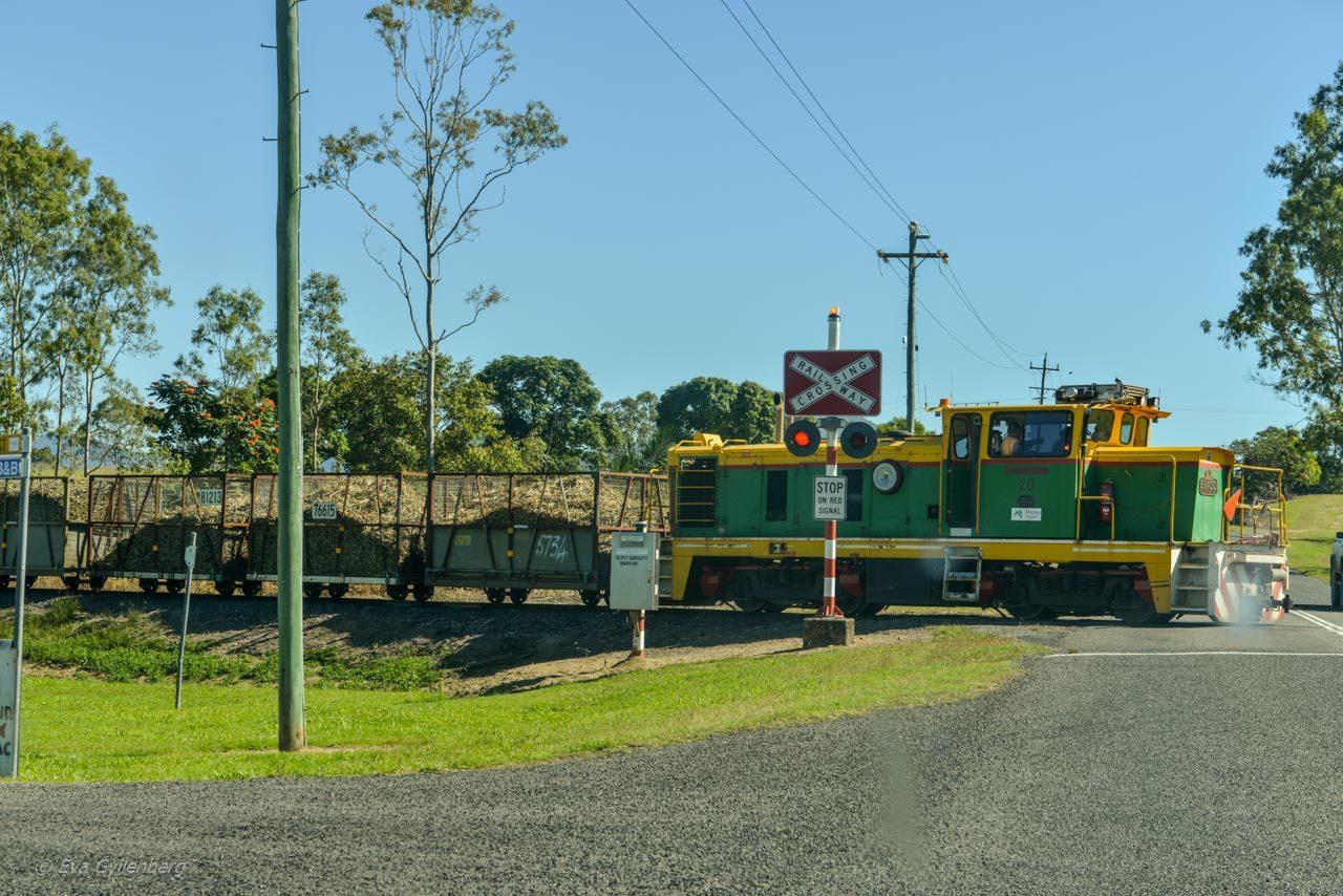 Cane trains