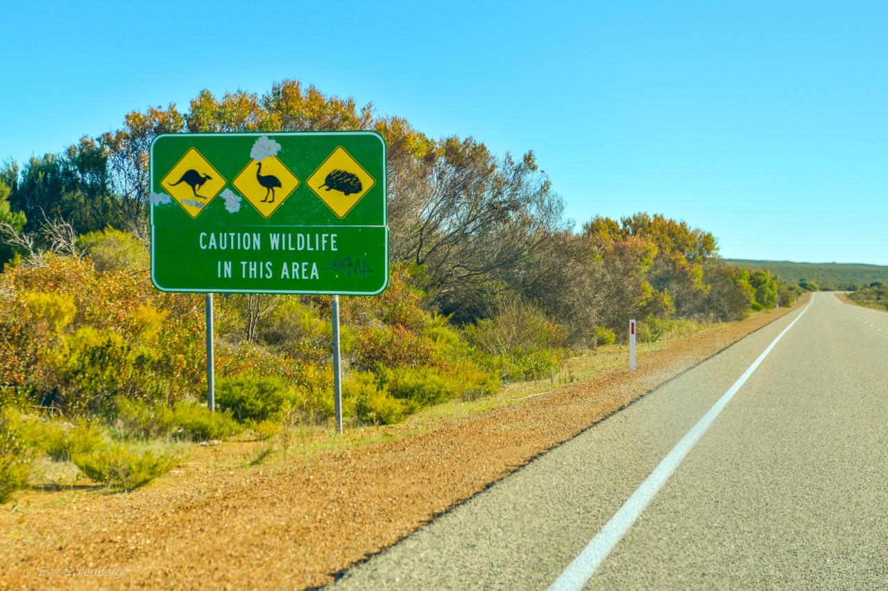Köra bil i Australien – Hur gör man?