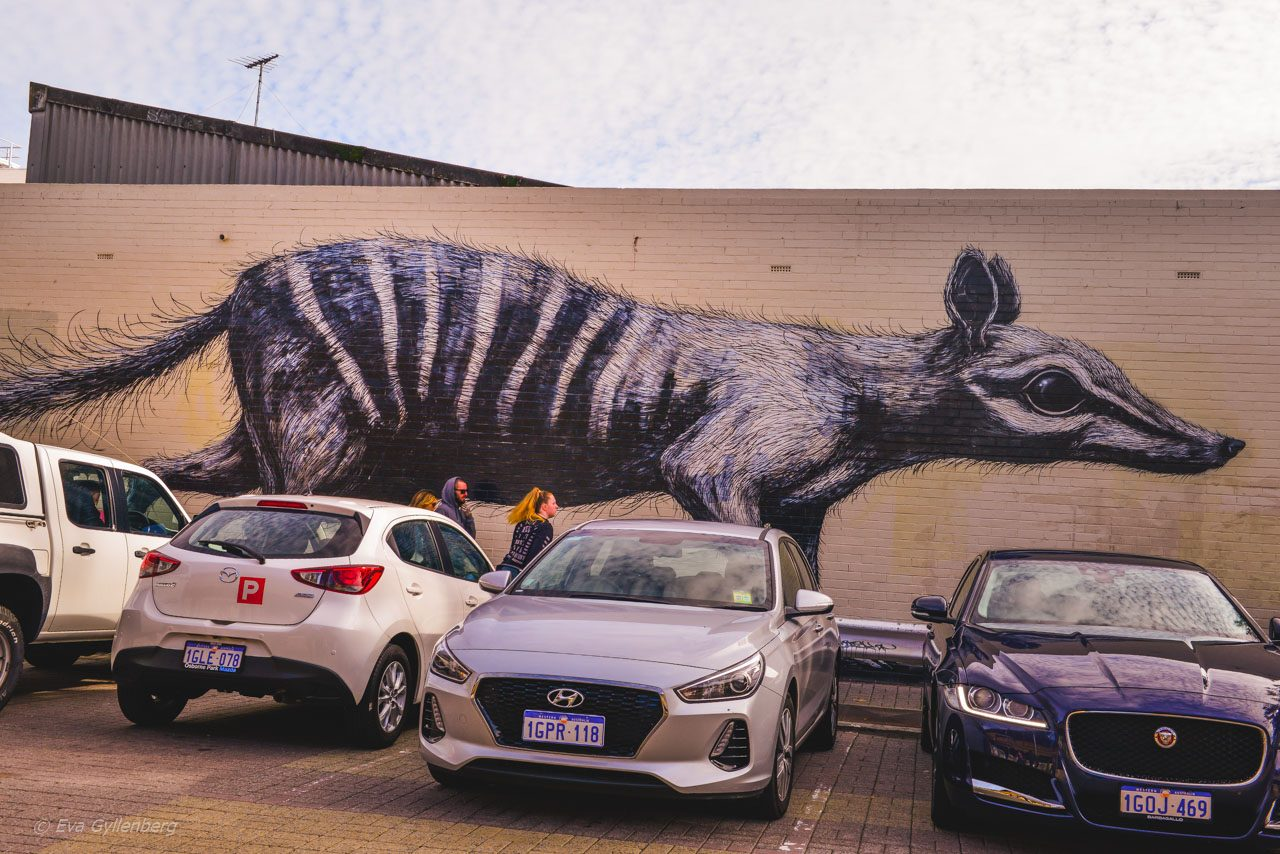 Wall art - Fremantle - Australien