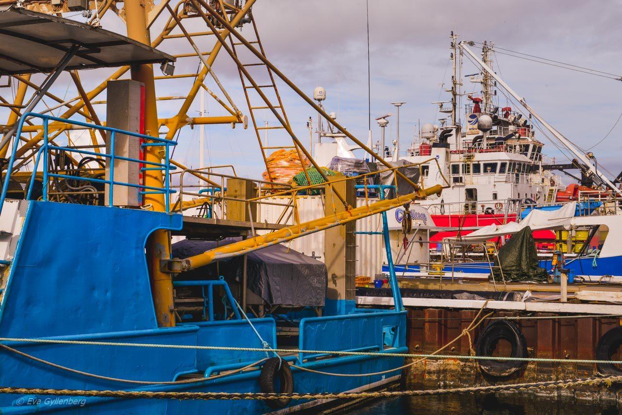 Hamnen i Fremantle - Australien