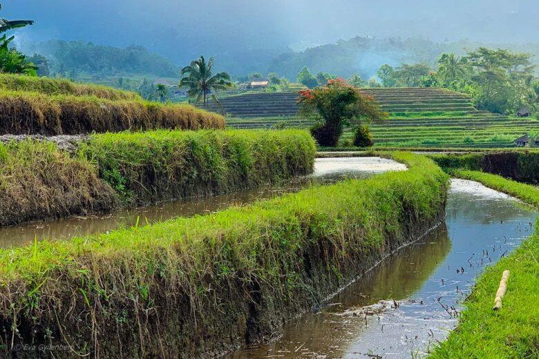 Jatiluwih - Risterrasser - Bali