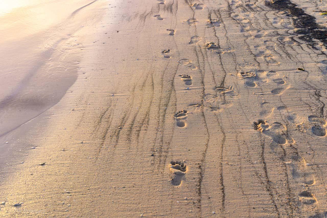 Fotspår i sanden i Shark Bay