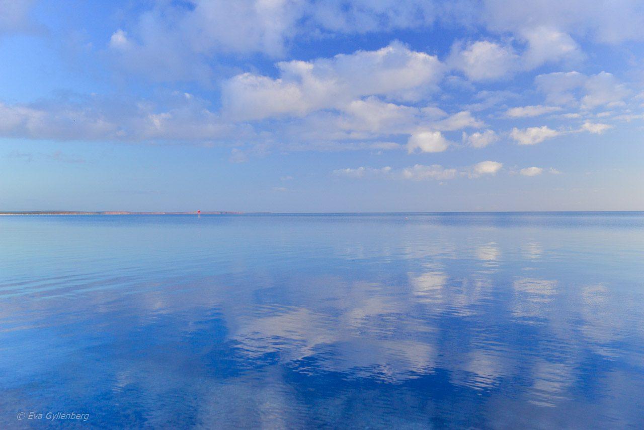 Spegelblankt hav i Shark Bay