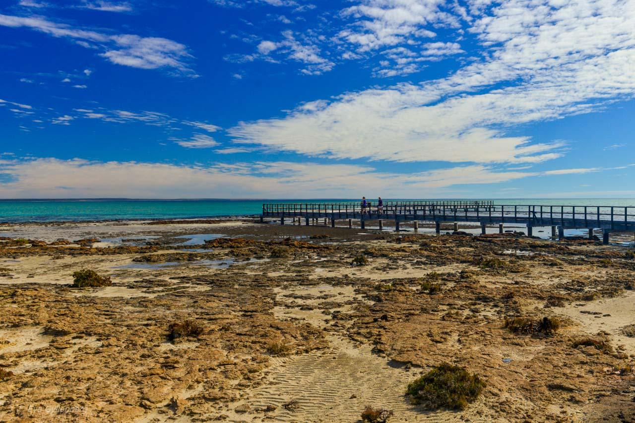 Stromatoliter vid Hamelin Pool