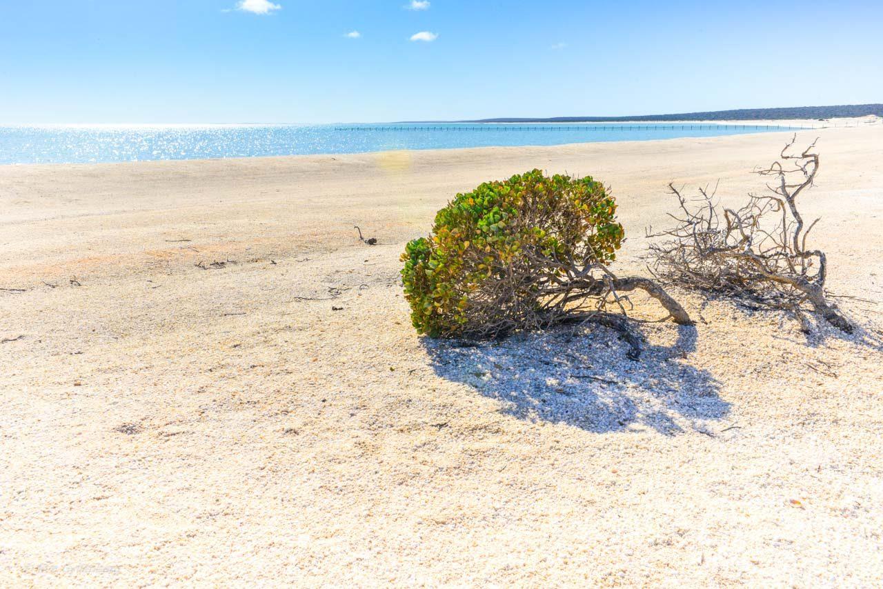 Shell beach i motljus