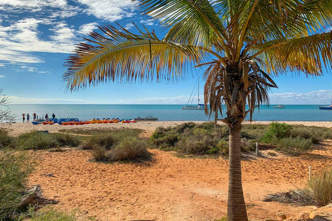 Stranden i Monkey Mia