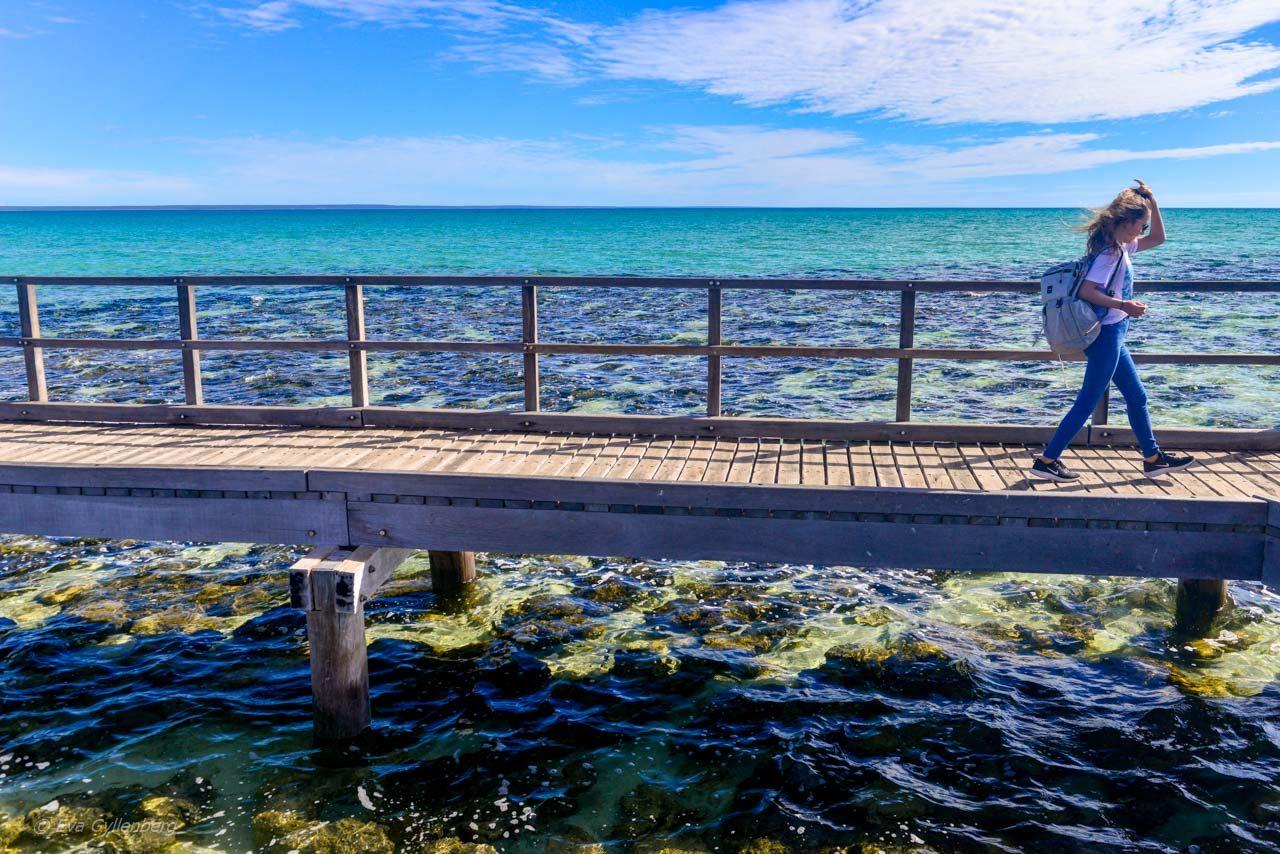 Hamelin Pool board walk
