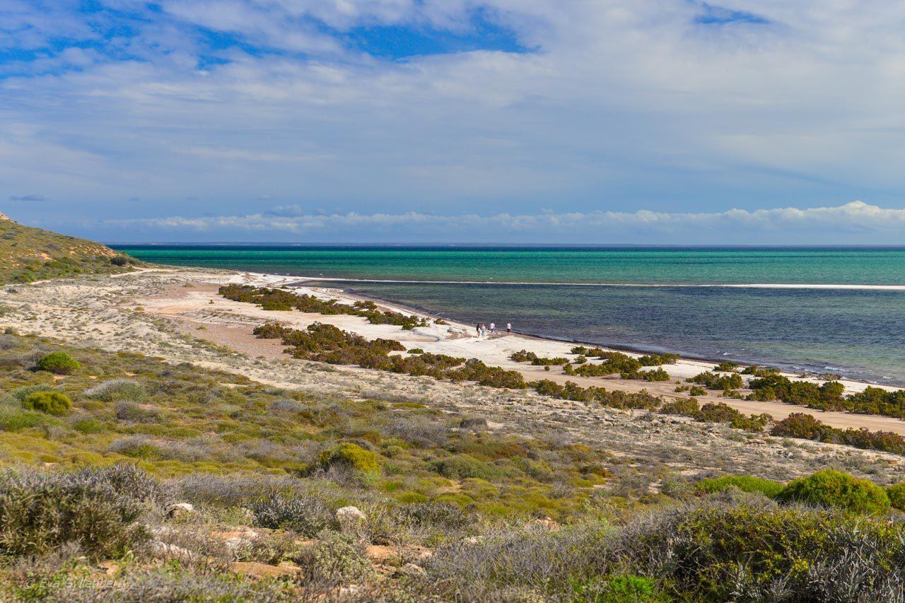 Strand i Shark Bay