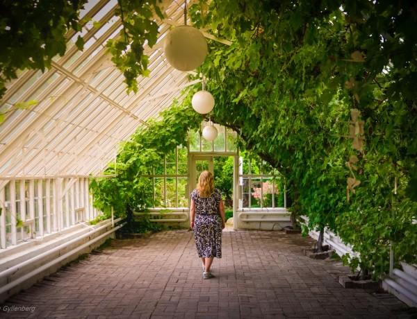 Sofiero - växthus