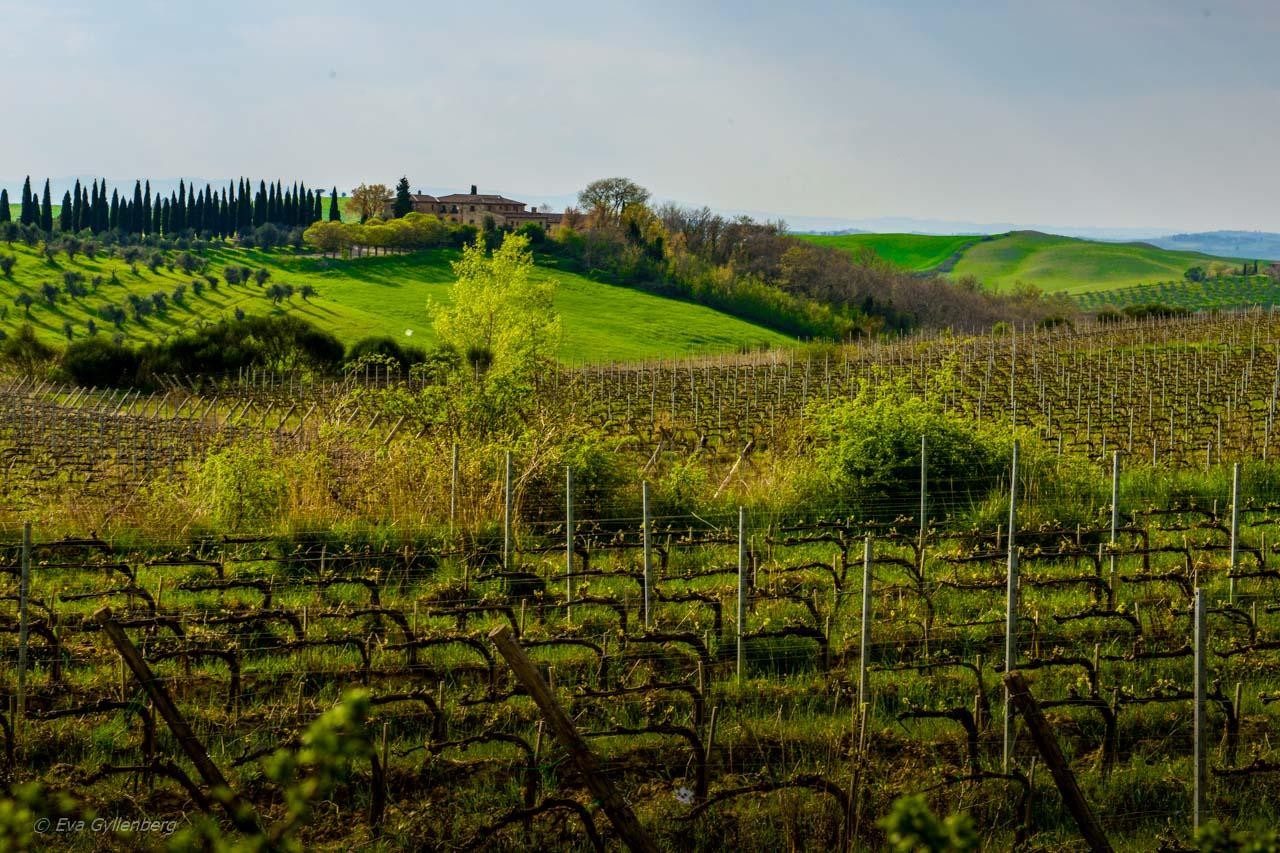 Val d'Orcia vingårdar