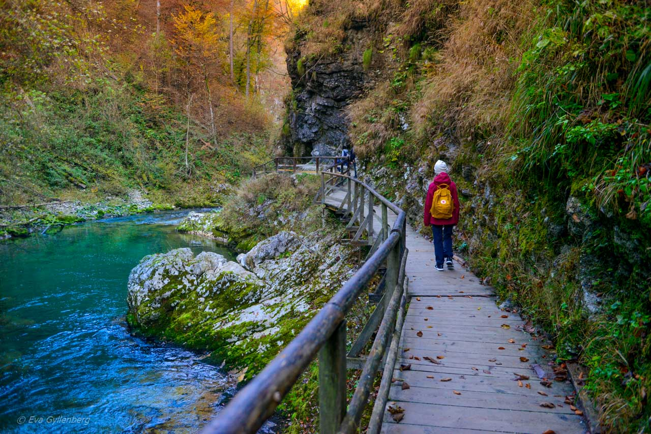 Dottern vandrar i Vintgar Gorge, Slovenien
