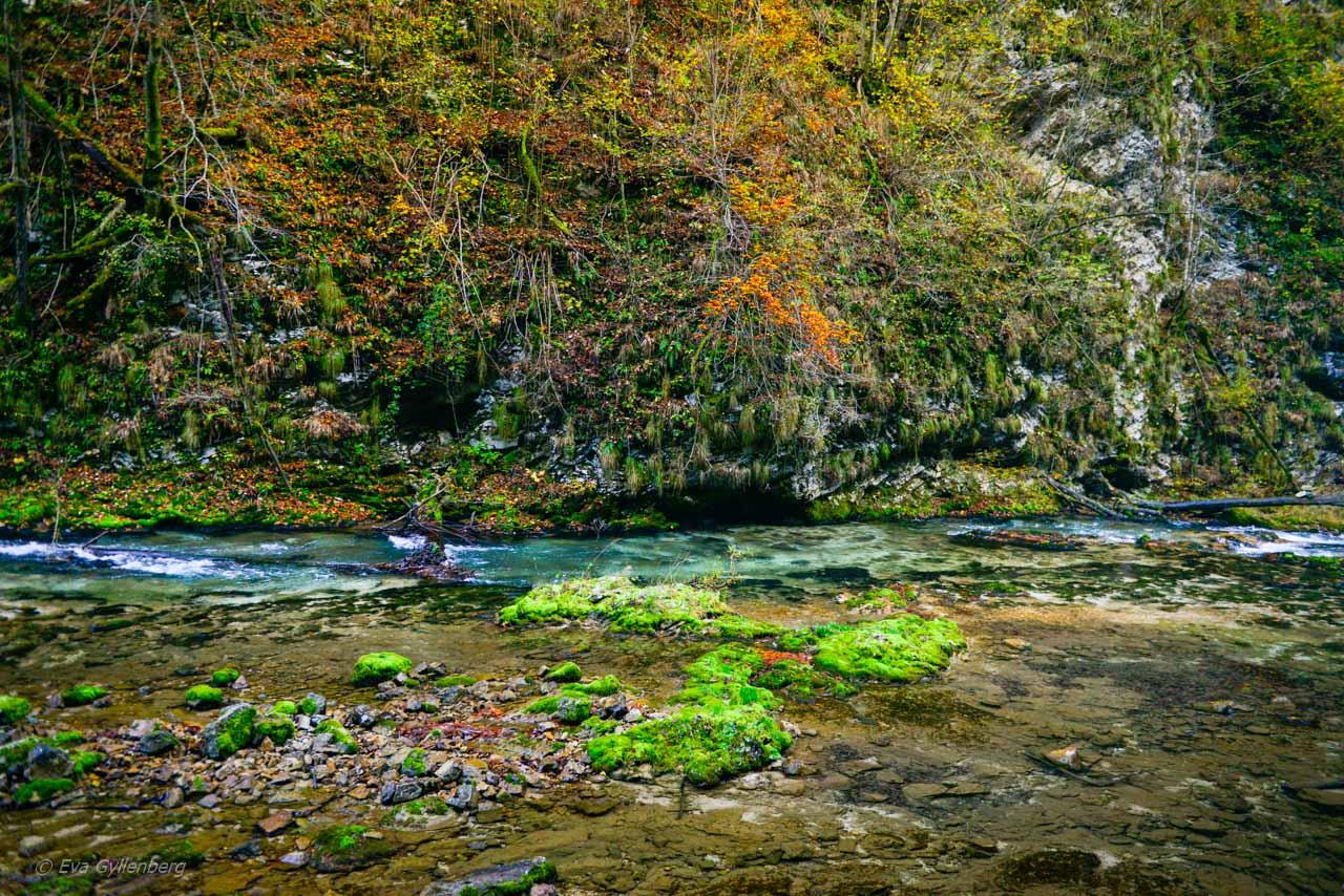 Green-Vintgar-Gorge
