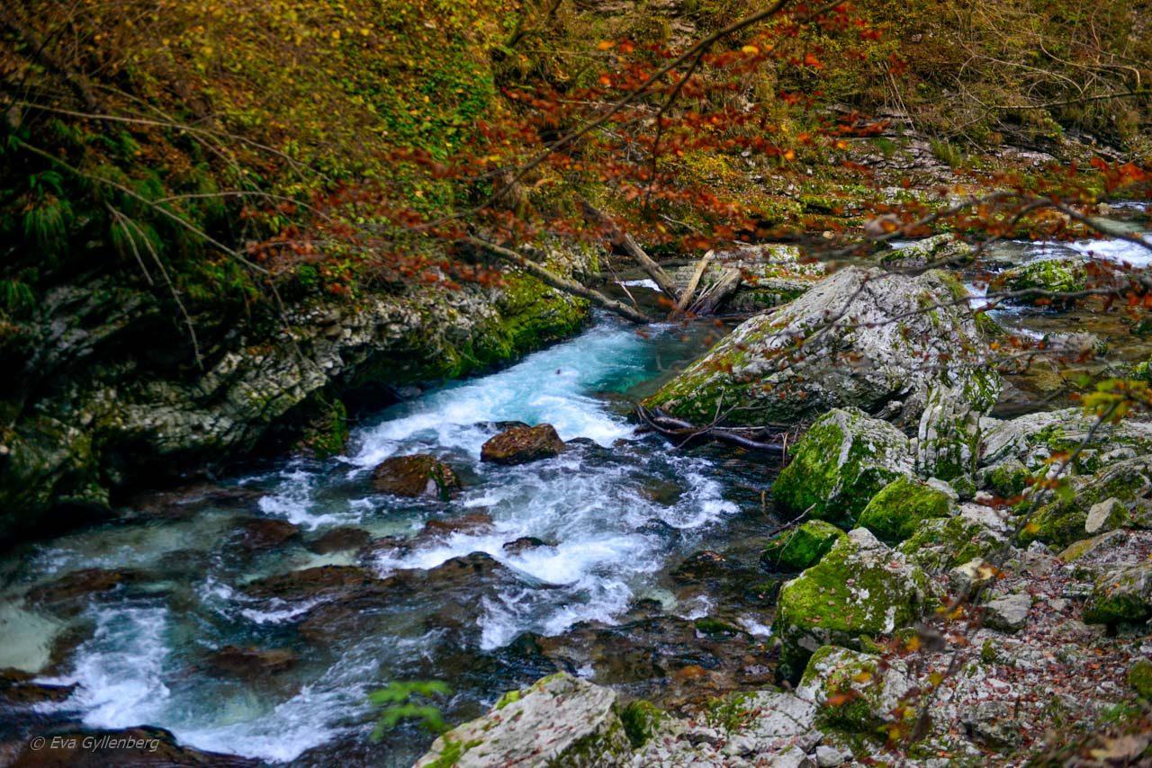 Vintgar Gorge - Slovenien