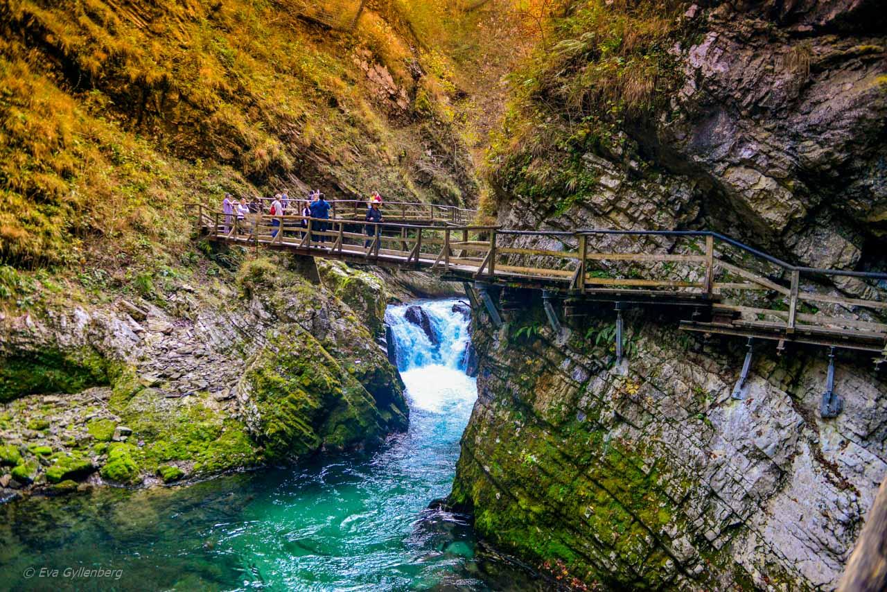 Bro över ravinen Vintgar Gorge