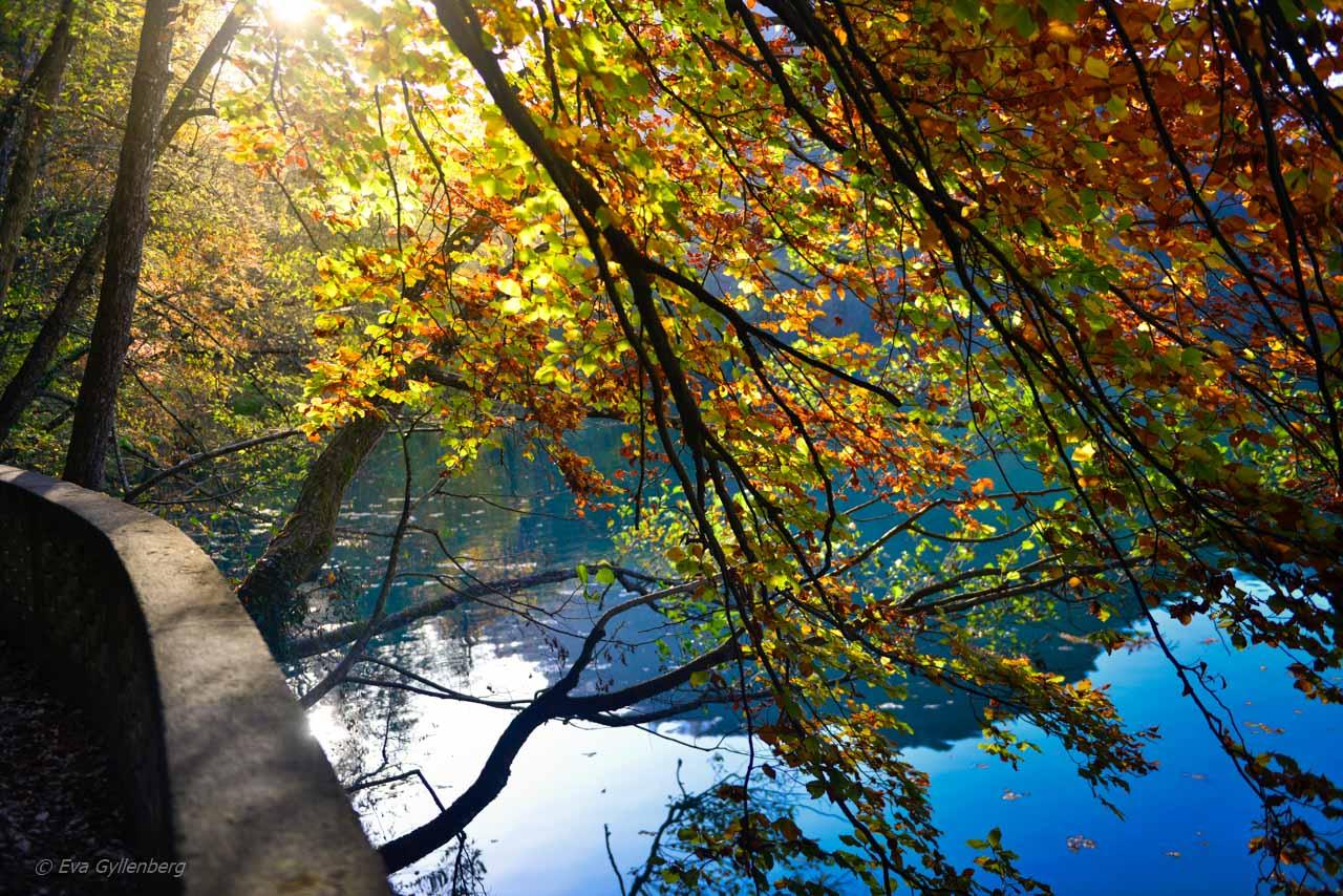 Vandringsleden runt Bledsjön