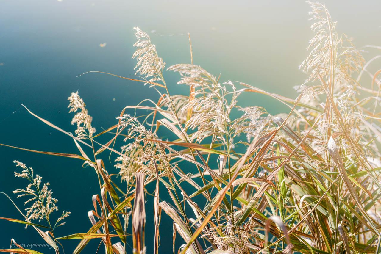 Växter vid Lake Bled