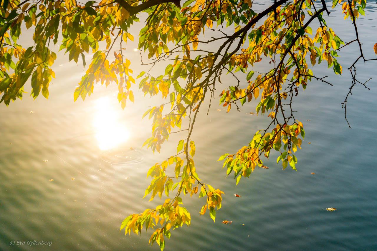 Solskenet glittrar i Bledsjön