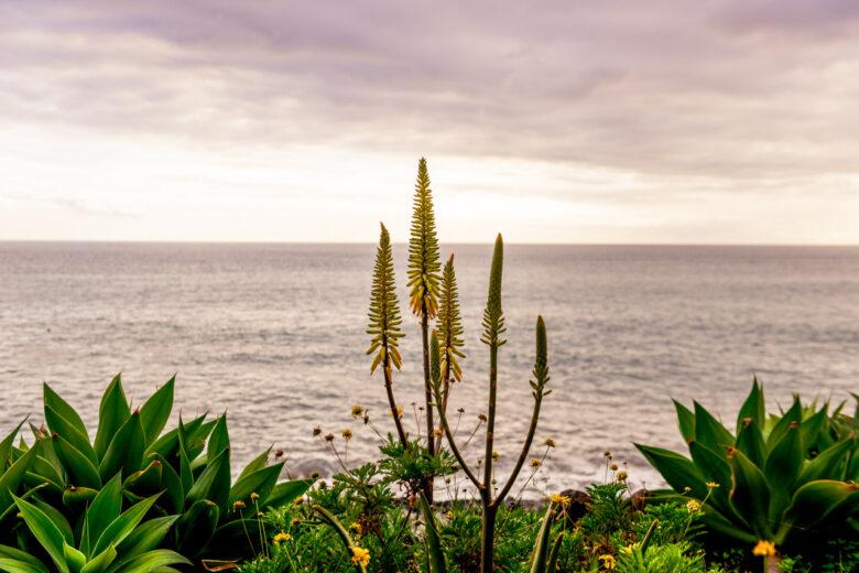Havet vid Faja Dos Padres