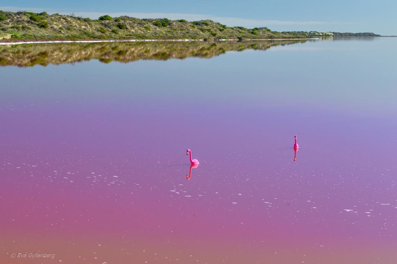 Rosa sjö i Australien