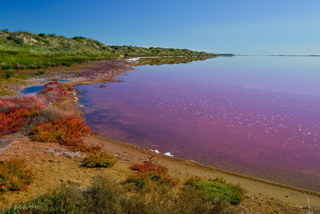 Hutt Lagoon - Den rosa sjön i Australien 10
