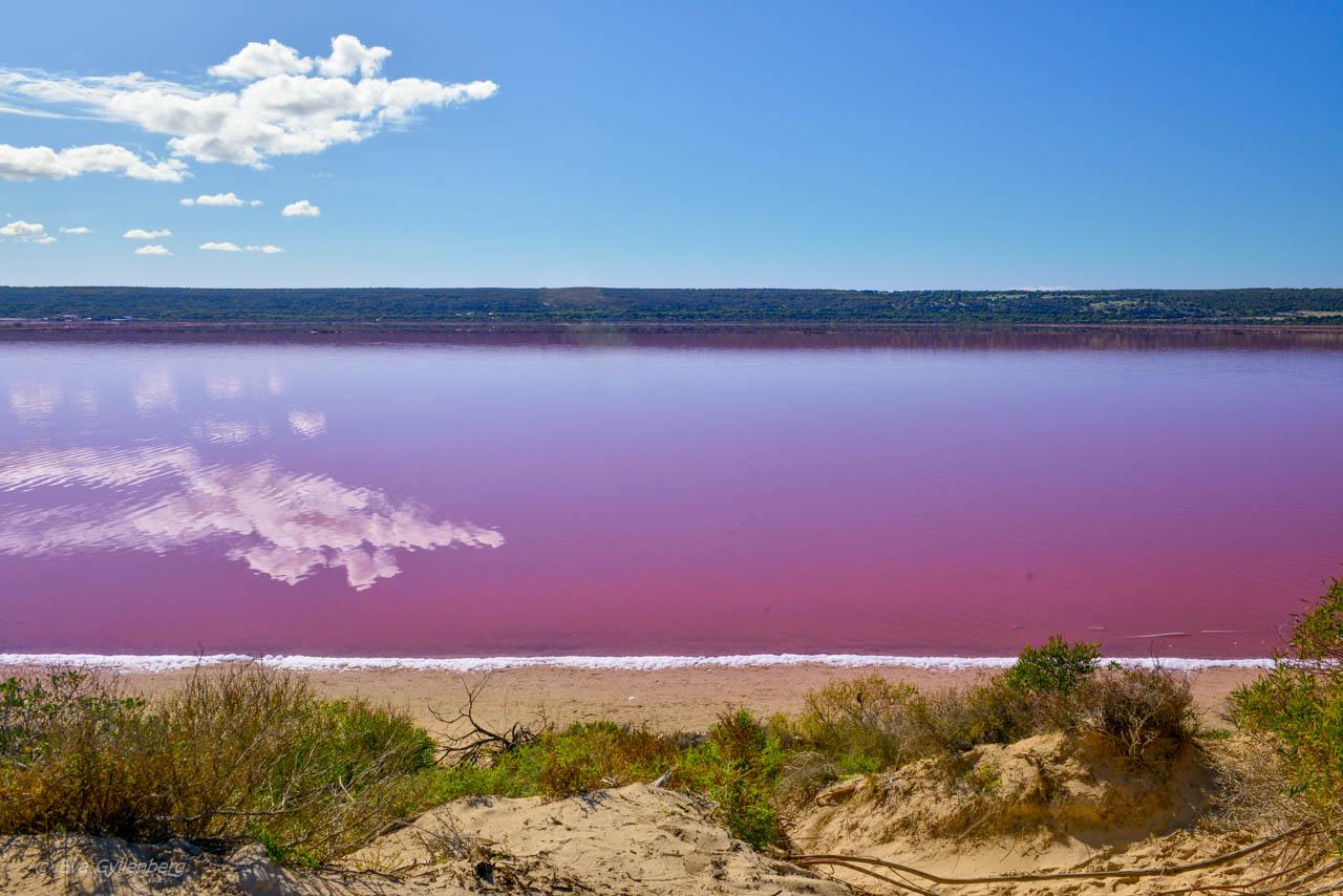 Den rosa lagunen Hutt Lagoon