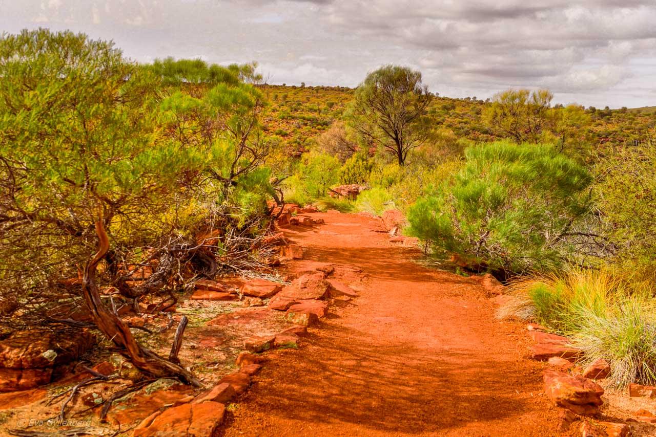Kalbarri Nationalpark - Röda flodraviner och flugor i Western Australia - Del 1 38