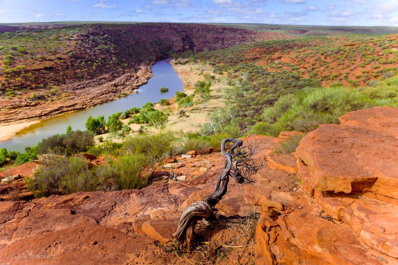 Kalbarri Nationalpark - Röda flodraviner och flugor i Western Australia - Del 1 44