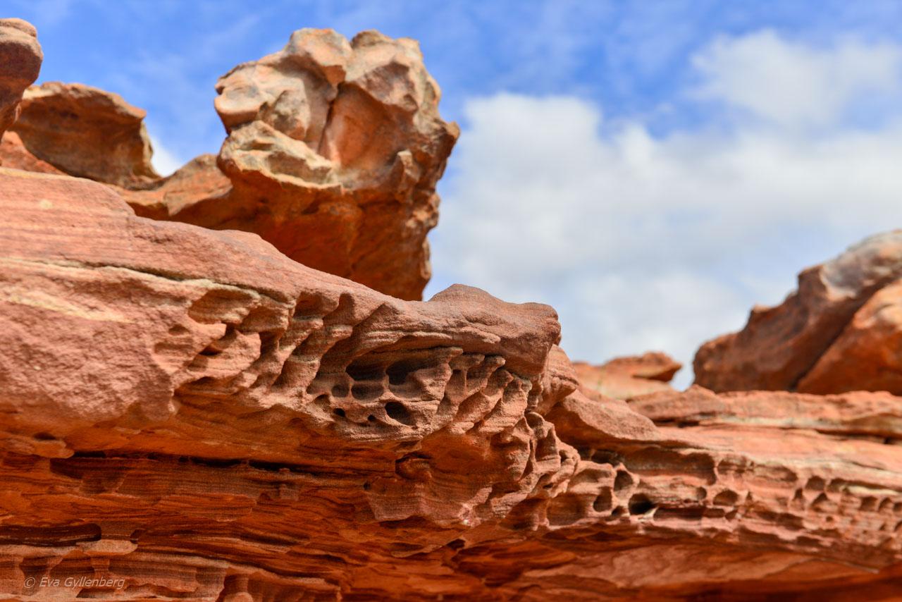Kalbarri Nationalpark - Röda flodraviner och flugor i Western Australia - Del 1 40