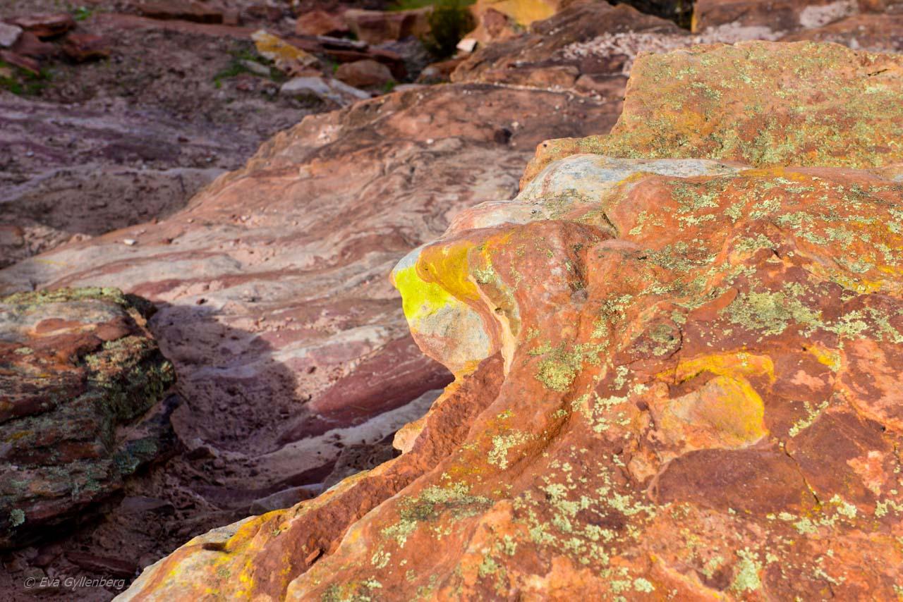 Kalbarri Nationalpark - Röda flodraviner och flugor i Western Australia - Del 1 28