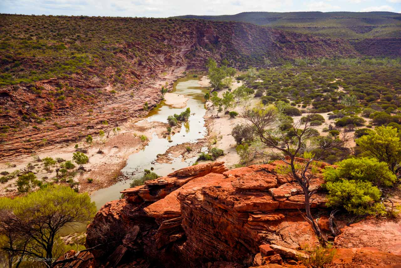 Kalbarri Nationalpark - Röda flodraviner och flugor i Western Australia - Del 1 24