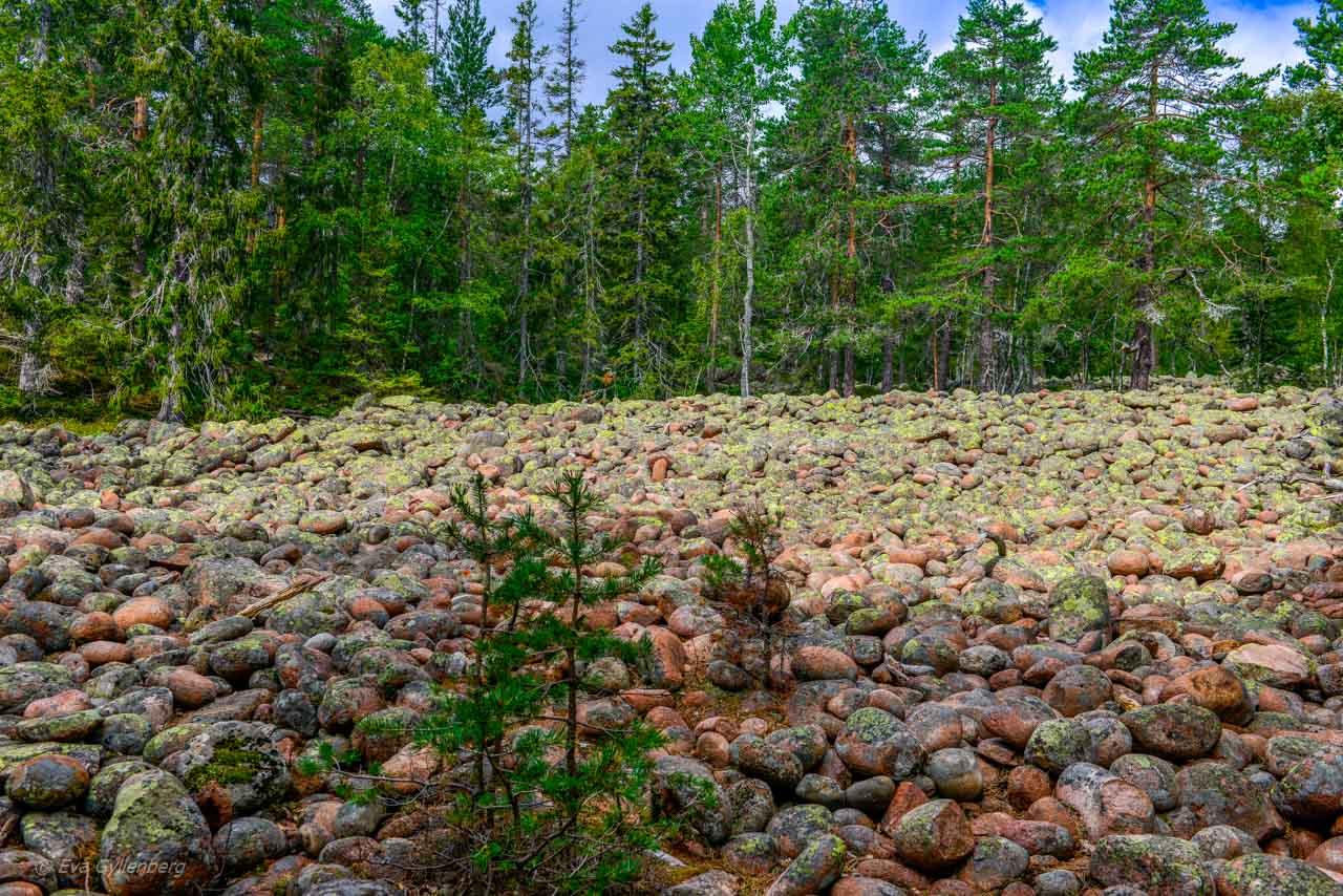 Rullstensås i Skuleskogen