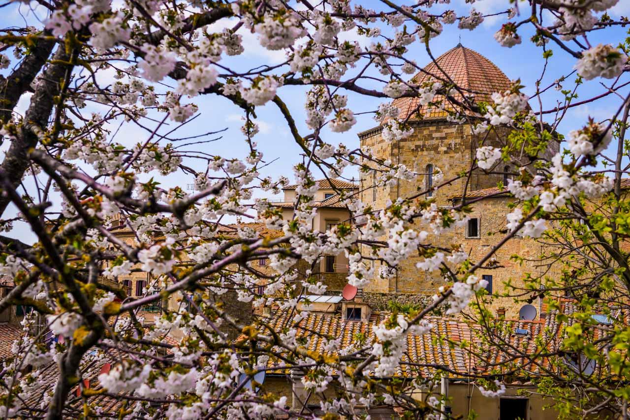 Vår i Volterra betyder blommarnde fruktträd