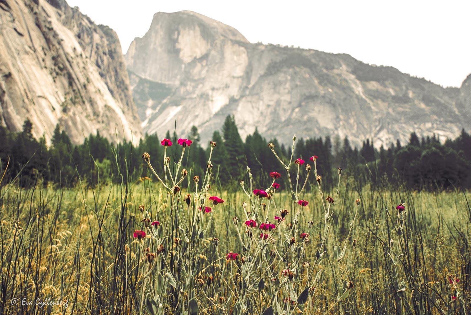 Bildsemester del 1 - Kalifornien i bilder 51