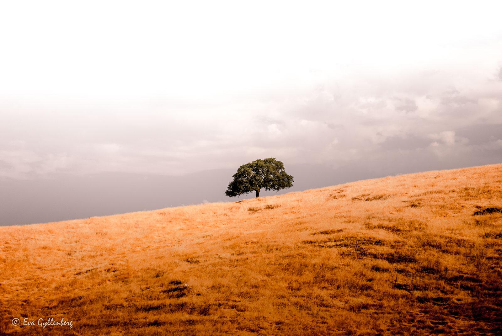 Bildsemester del 1 - Kalifornien i bilder 13