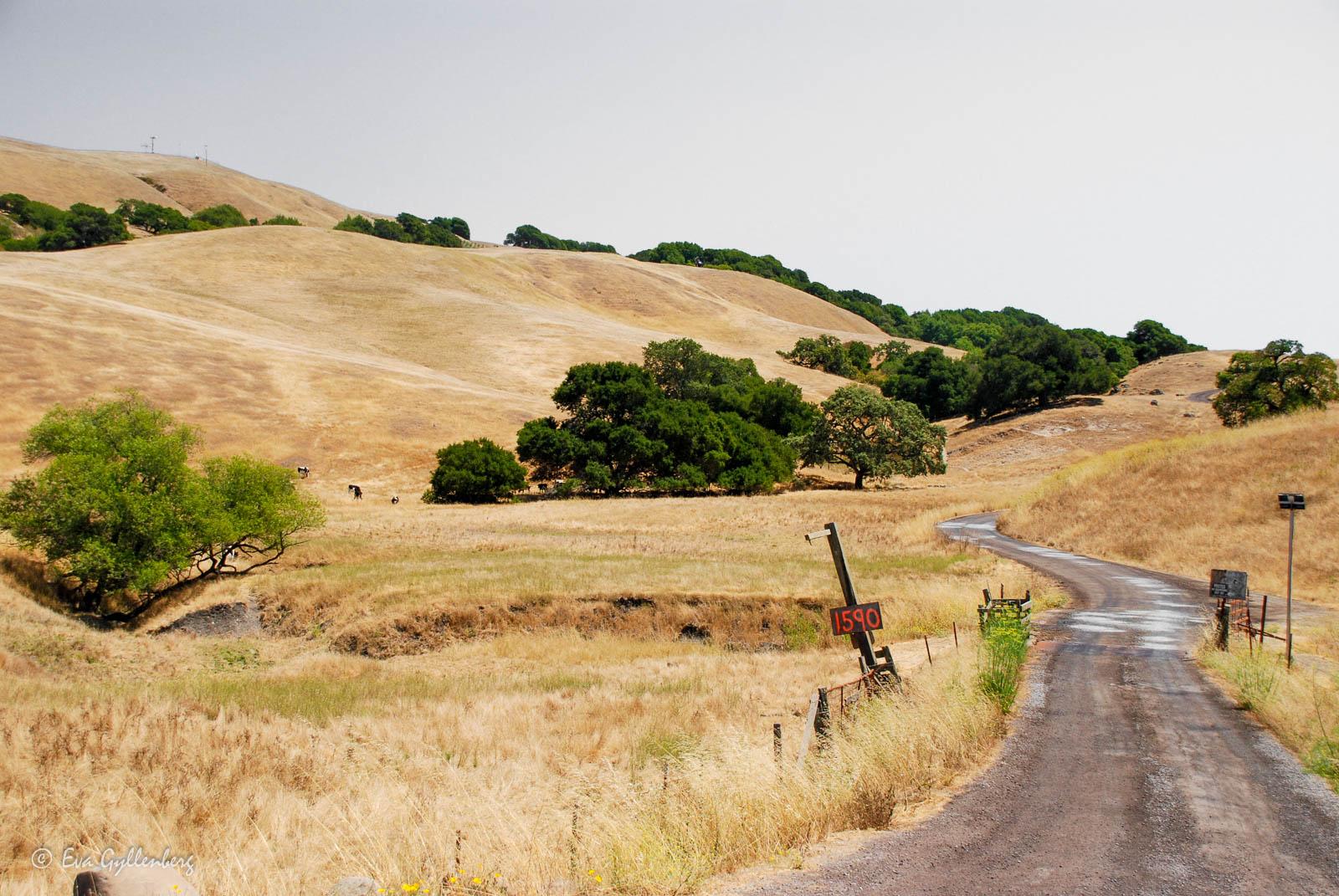 Bildsemester del 1 - Kalifornien i bilder 25