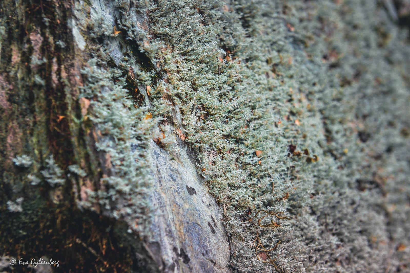 Mossbeklädda stenar i Mount Aspiring