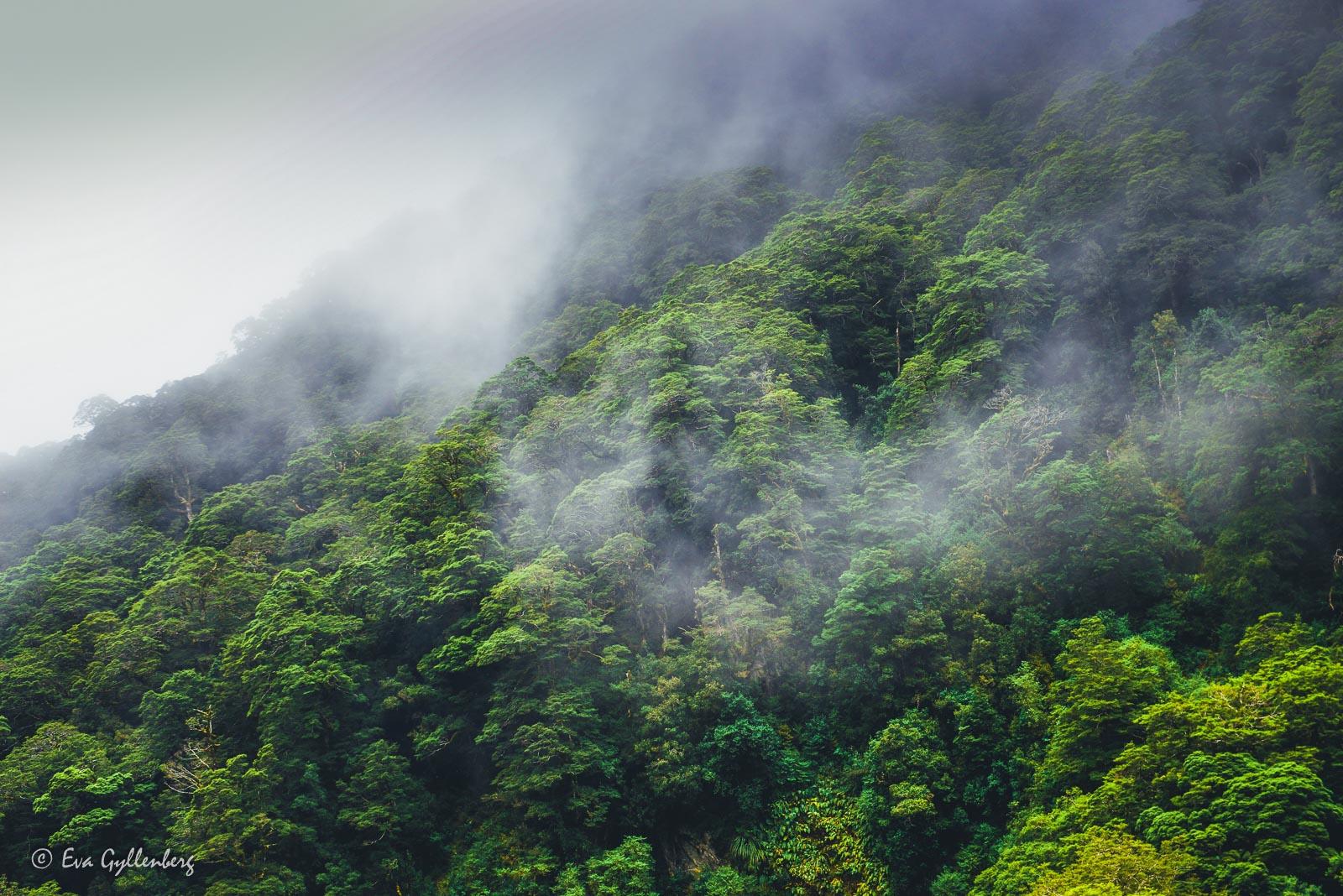 Dimmiga berg i Mount Aspiring